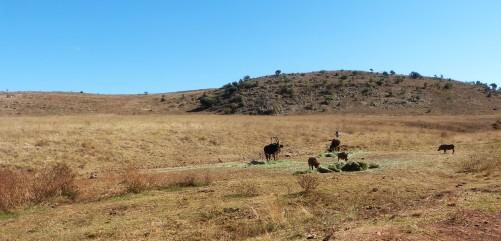 Rhino & Lion